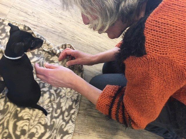 Mieterin Annemarie Birwe nähert sich dem Welpen. Ganz begeistert sitzt sie lange mit ihm auf dem Fußboden. Foto: SMMP/Wollner-Beermann